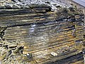 New Albany Shale (Upper Devonian; MacDonald Knob Outcrop, Bullitt County, Kentucky, USA) 10 (32030760898).jpg
