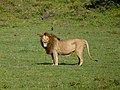 Ngorongoro Crater (23) (13962064190).jpg