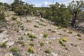 Ninemile Hill - Flickr - aspidoscelis.jpg