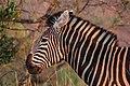 Nkomazi Game Reserve, South Africa (22664074901).jpg