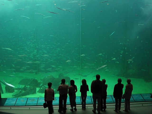 Oceanario de Nordsøen