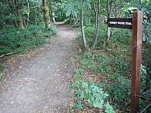 Norsey Wood