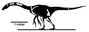 Nothronychus - Skeletal restoration of N. mckinleyi