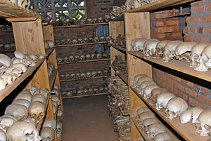 Ntarama Genocide Memorial Centre - Shelves of skulls