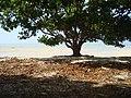 Nyamplong - panoramio.jpg