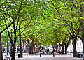 Occidental Park.jpg