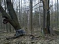 Old Car Parts Hanging from Trees - panoramio.jpg