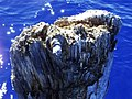 Old Man of the Lake - Crater Lake National Park - NPS 4.jpg