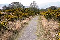 On the Kerry Way - geograph.org.uk - 781181.jpg