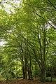 Oombergse bossen Zottegem 05.jpg