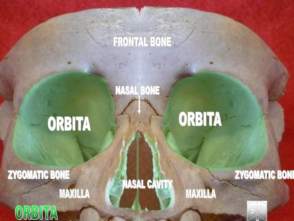 Orbita2