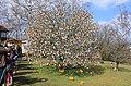 Ostereierbaum, mit 10.000 Eiern geschmückt IMG 9612WI.jpg
