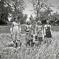 Oves žanjejo. Pri Čiči, Velika Slevica 1960 (3).jpg