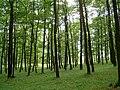 Přírodní park Baba925.jpg