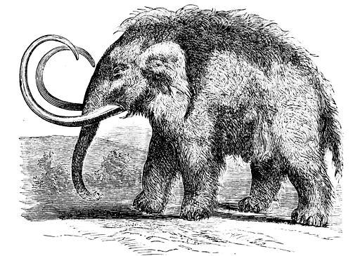 PSM V01 D219 Mammoth