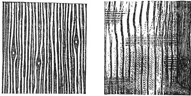 PSM V29 D624 Tangential and radial sections of tamarack.jpg