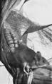 PSM V53 D463 Deer mouse.png