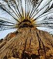 Palm in Sharjah.jpg