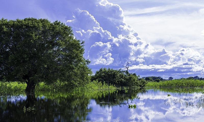 Dicas de viagem no Pantanal do Mato Grosso