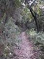 Parc de Vallvidrera 175-7560 IMG.JPG