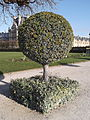 Paris 18 November 2011 - Jardin des Tuileries 1.jpg