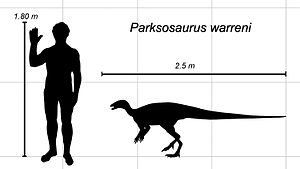 Parksosaurus - Parksosaurus scale diagram