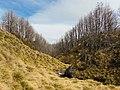 Parque Nacional Puyehue 01.jpg