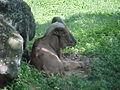 Parque Zoologico de Caricuao 2000 036.jpg