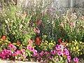 Parterre de fleurs à Tesson - panoramio.jpg