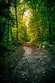 Path Well Travelled (43152659191).jpg