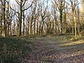 Path from car park, Bigsweir Wood - geograph.org.uk - 1702509.jpg