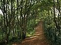 Path through Marridge Wood - geograph.org.uk - 990491.jpg