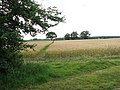 Path through a field - geograph.org.uk - 1406548.jpg