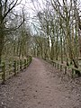 Pathway, Sherwood Forest - geograph.org.uk - 1714345.jpg