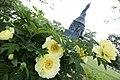 Peonies bloom in Arlington National Cemetery (17865154432).jpg