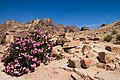 Petra - panoramio (22).jpg