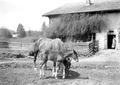 Pferd mit Fohlen vor Bauernhof - CH-BAR - 3241253.tif