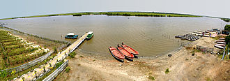 Pichavaram - A view of the forest