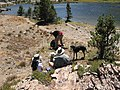 Picnic at Shell Lake just north of Bennettville - Tioga Pass - panoramio.jpg