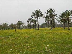 Eshkol National Park - Image: Piki Wiki Israel 19167 Blooming in Eshkol Park