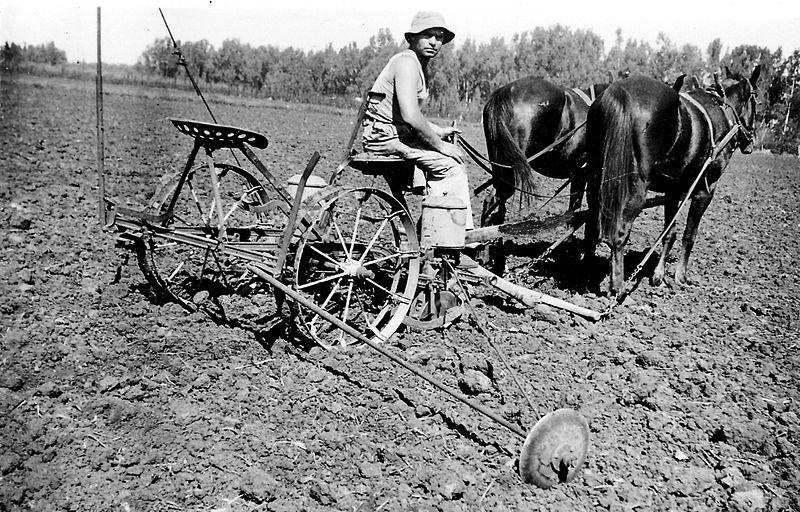 גן-שמואל-זריעה בשדה 1938