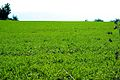 PikiWiki Israel 29265 Plants of Israel.jpg