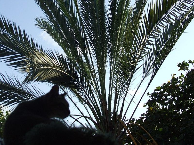 חתול ברקע ענפי דקל