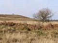 Pitchers Knowle on Hampton Ridge, New Forest - geograph.org.uk - 156909.jpg