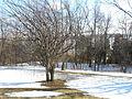 Plaines d Abraham en hiver 063.JPG