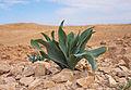 Plant in desert.jpg