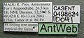 Platythyrea arthuri casent0498624 label 1.jpg