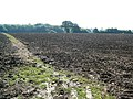 Ploughed Fields - geograph.org.uk - 534928.jpg