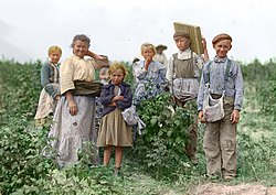 Several Polish immigrant workers, some of which are children, are seen standing in their fields after picking berries.