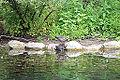 Pond (9443835914).jpg